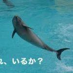 『必要』が必要。仙台泉中央ライブチャットアイシス・スタッフブログ